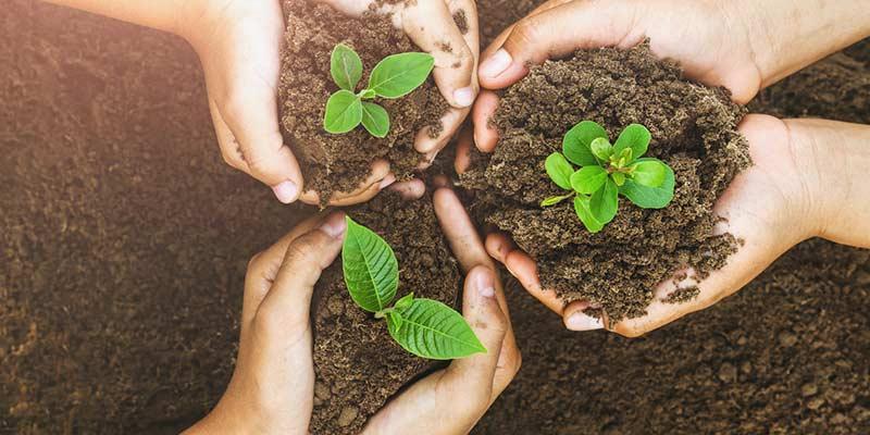 Achtsamens Umgehen mit den Pflanzen