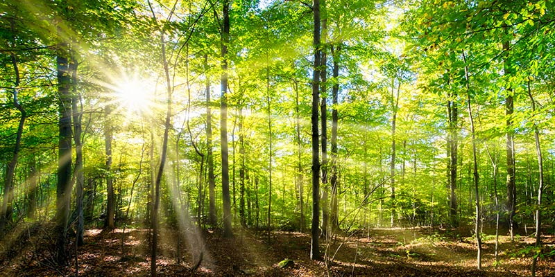 Sonnenstrahlen im Wald beim Waldbaden