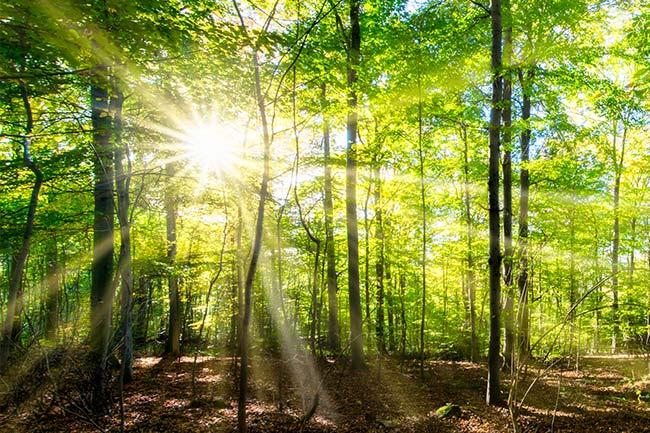Sonnenstrahlen beim Waldbaden genießen